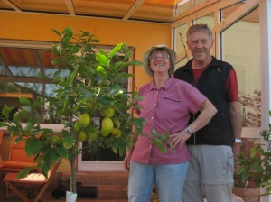 My parents with our mature citrus trees.