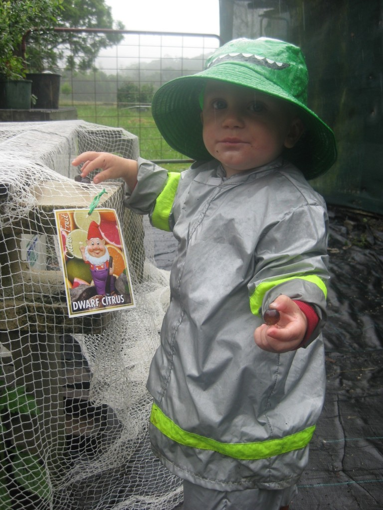 Our Dwarf Citrus expert Jonah