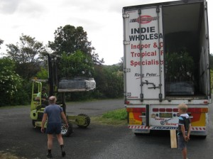 Peter Reutter of Indie Roadlines - mobile phone number:  0408 437 718