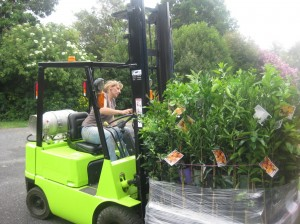 Sonja Engelhardt loading wholesale citrus trees for delivery.