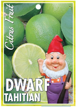 wholesale Dwarf Citrus trees